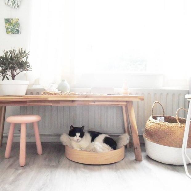Charles, o gato de Jessica, é figura presente em seus posts no Instagram (Foto Reprodução/Instagram)